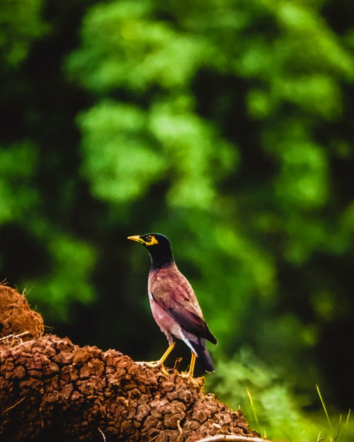 Free stock photo of Adobe Photoshop, beauty, beauty in nature, bird