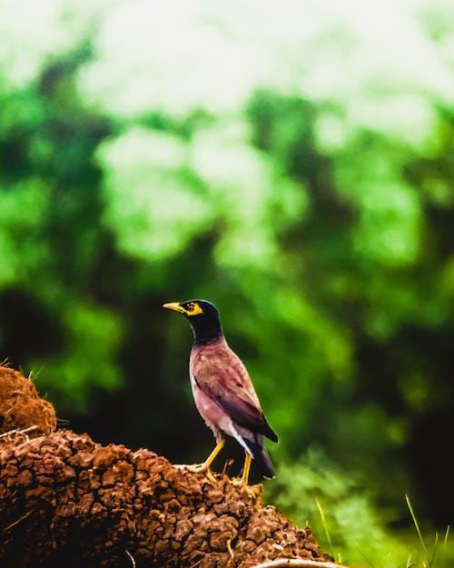 Základová fotografie zdarma na téma Adobe Photoshop, černý les, divočina, fotografie přírody