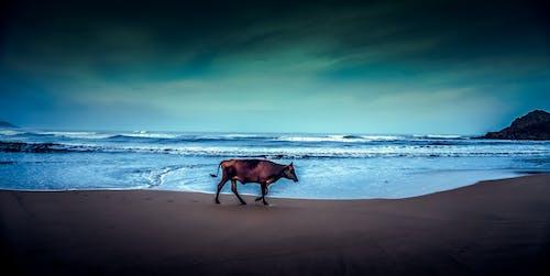 Základová fotografie zdarma na téma 4k tapeta, barevná tapeta, cool tapeta, fotografování zvířat