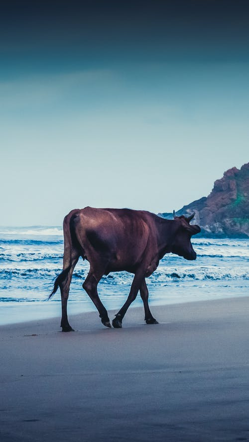 Free stock photo of 4k wallpaper, animal, animal farming, Animal Kingdom