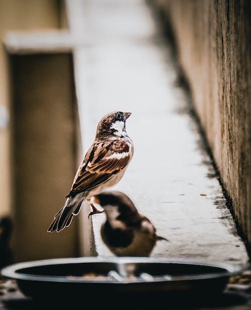 Immagine gratuita di birdwatching, casetta per uccelli, mangiatoia per uccelli, sfondi in hd