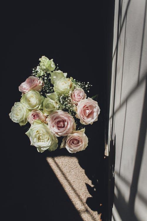 Fotobanka sbezplatnými fotkami na tému kontrast, náladový, ruže