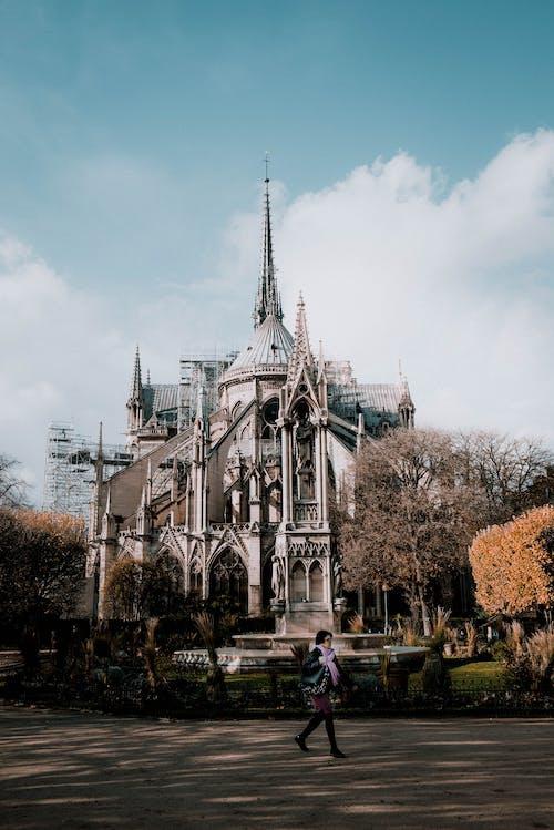 Photos gratuites de arbres, architecture, bâtiment, cathédrale