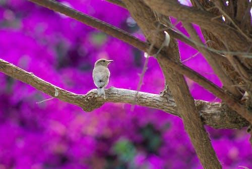 Foto d'estoc gratuïta de au, au enredant, branca, branca d'arbre