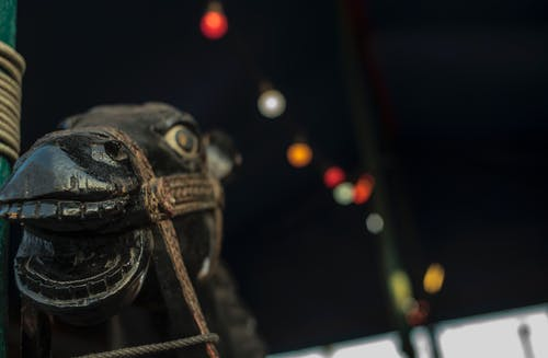Photos gratuites de cheval, cheval noir, cirque, statue