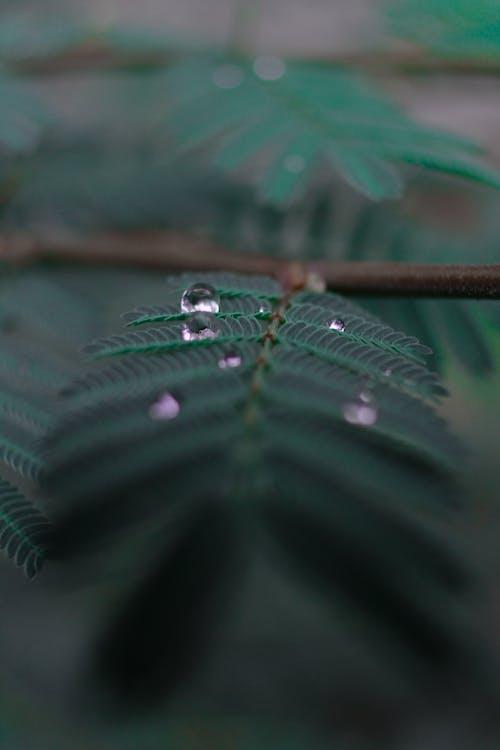 güz yaprakları, koyu yeşil, su damlası içeren Ücretsiz stok fotoğraf