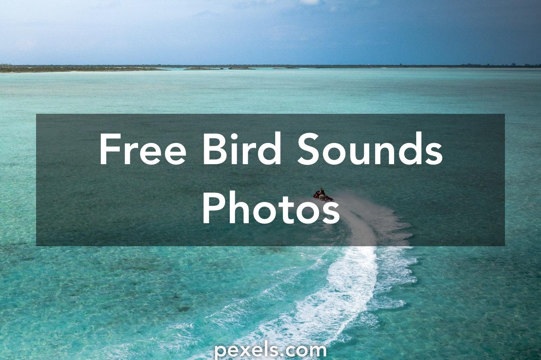 1000+ Interesting Bird Sounds Photos · Pexels · Free Stock Photos