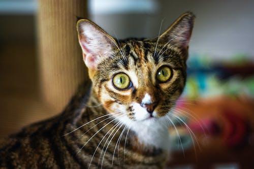 Foto stok gratis alam, anak binatang, anak kucing, belum tua