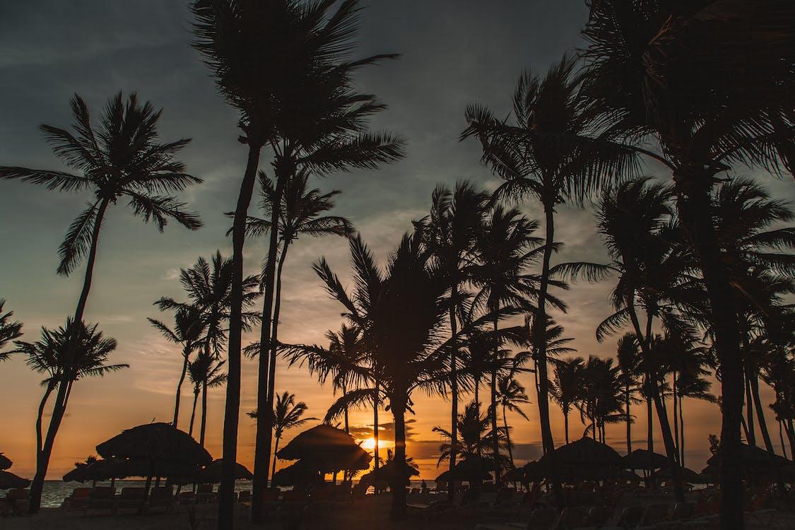 caribe, coqueiros, noite