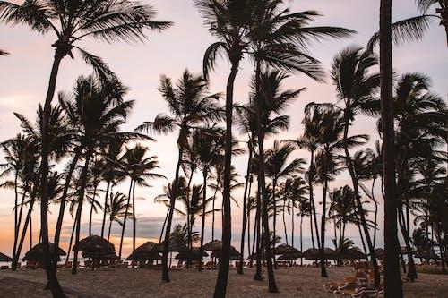 Foto d'estoc gratuïta de caribe, coqueiros, nit, por do sol
