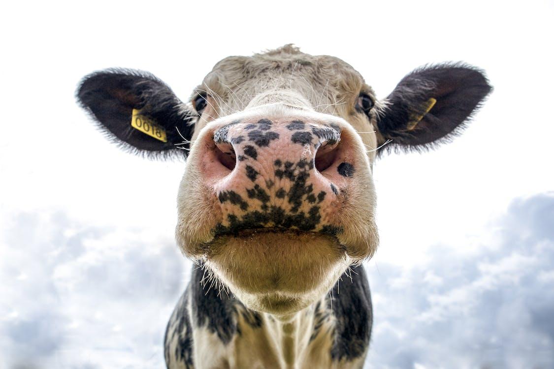 動物, 動物攝影, 動物的臉 的 免費圖庫相片