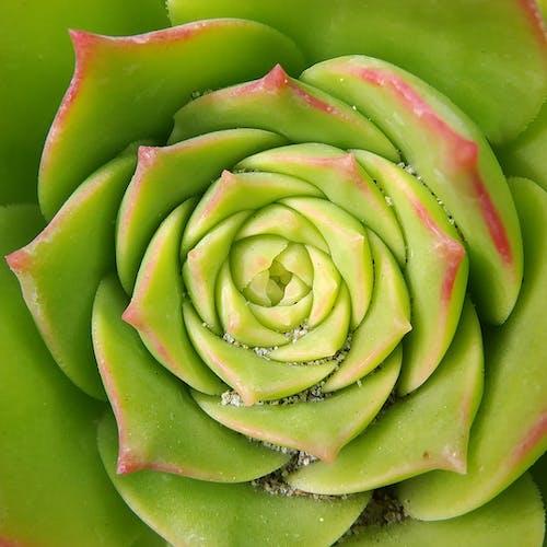 Gratis stockfoto met groen, macro, natuur, rode tip