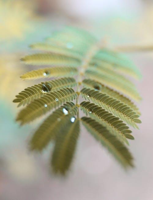 koyu yeşil, su damlası, yapraklar içeren Ücretsiz stok fotoğraf