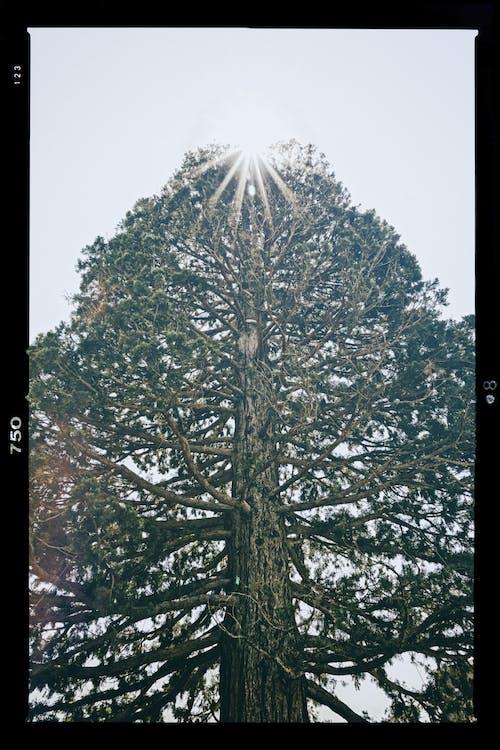 Foto d'estoc gratuïta de a l'aire lliure, arbre, branques d'arbre, brillant