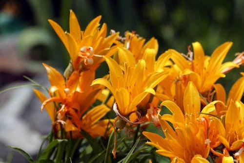 Ingyenes stockfotó fényes, gyár, gyönyörű virágok, kert témában