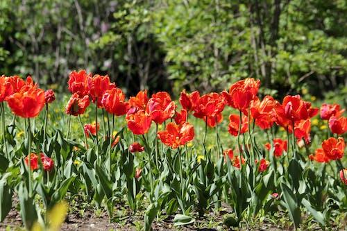 Ingyenes stockfotó élő természet, fényes, gyár, gyönyörű virág témában