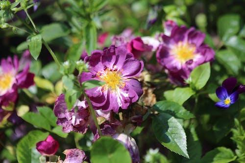 Ingyenes stockfotó élő természet, gyár, kert, lila témában
