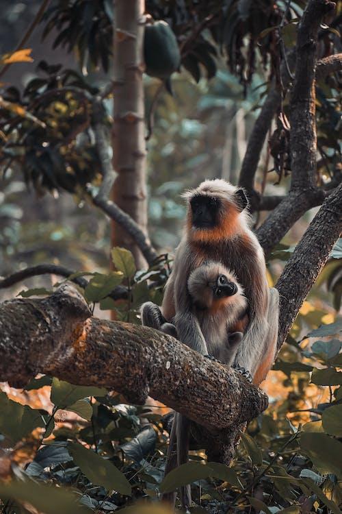 Бесплатное стоковое фото с два, джунгли, дикий, животное