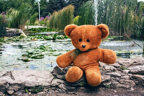 Brown Bear Plush Toy on Stone