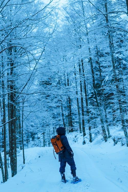 Fotos de stock gratuitas de bosque, excursionismo, explorador, explorando