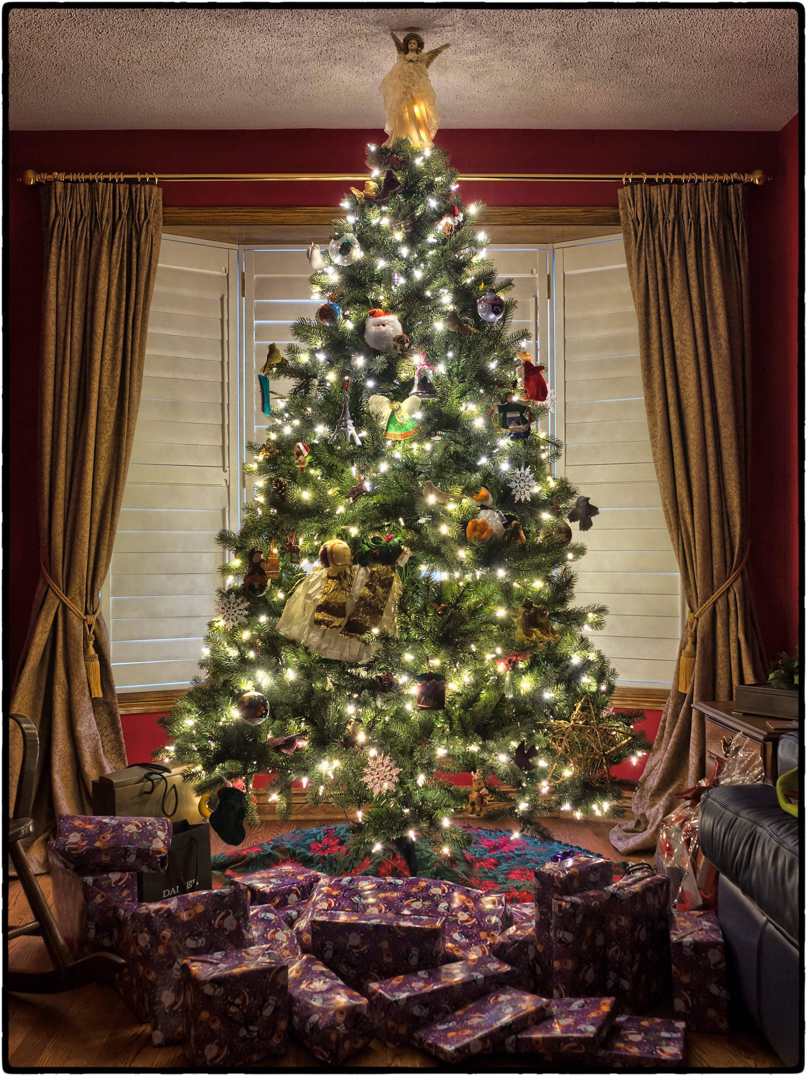 borovice, boží hod vánoční, dárky