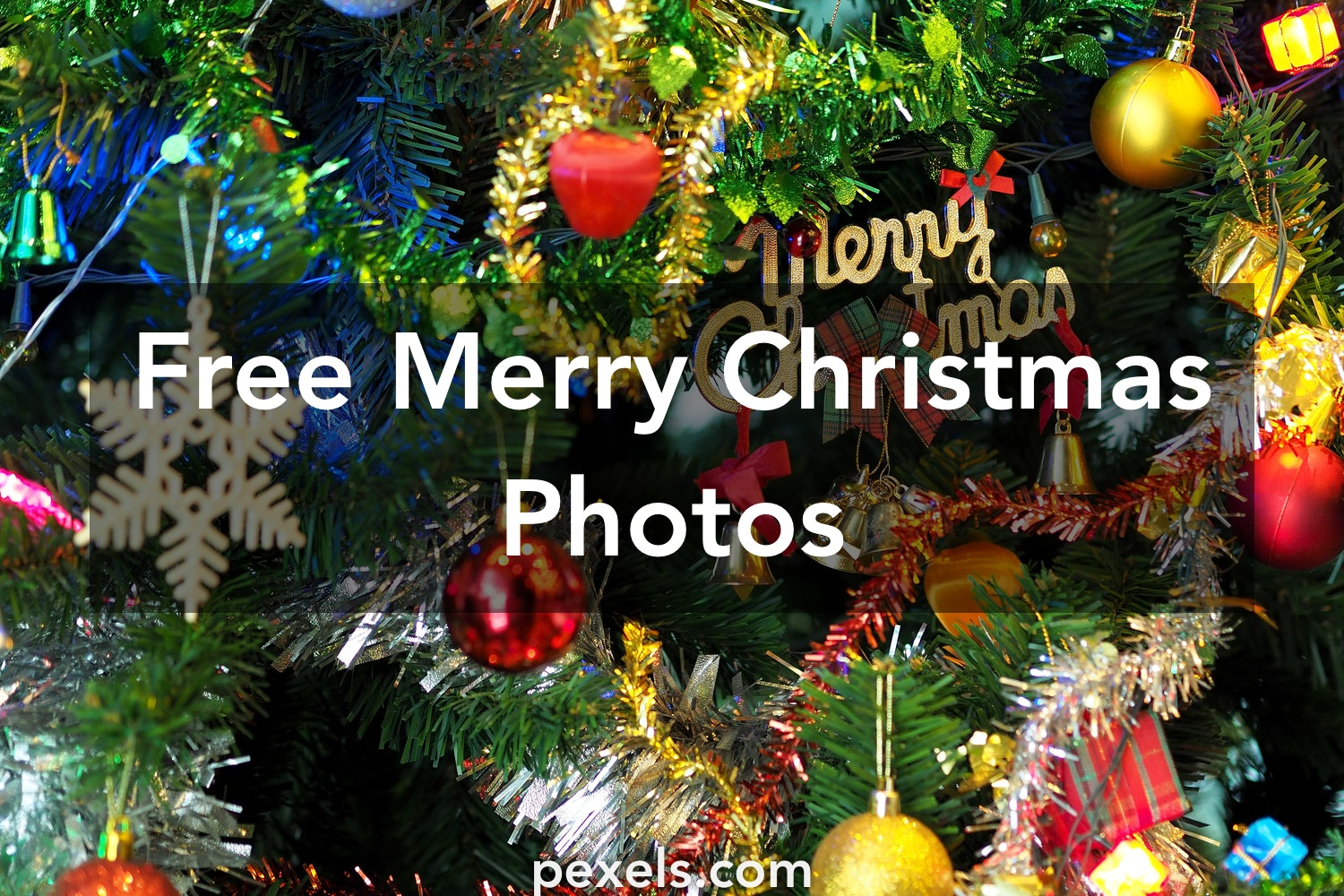 Christmas Images Free.1000 Interesting Merry Christmas Photos Pexels Free