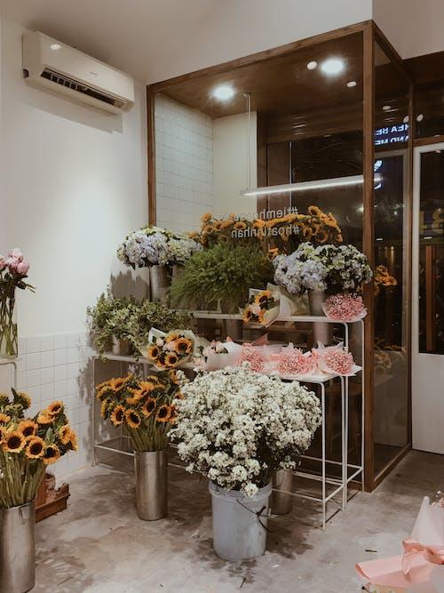 Безкоштовне стокове фото на тему «hochiminhcity, В'єтнам, житель Азії, квітка»