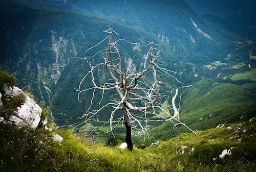 Free stock photo of alone, alpine, dead, grass