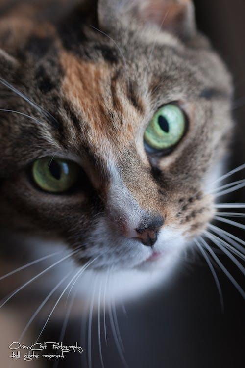 koty, oko kota