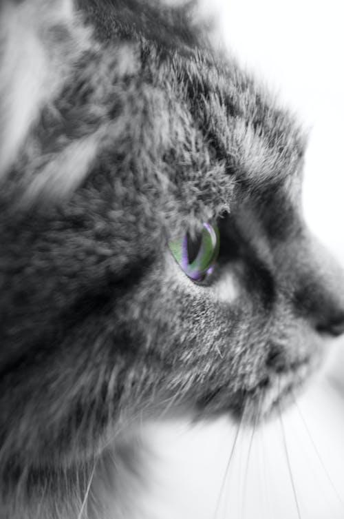Free stock photo of cat eye, cats