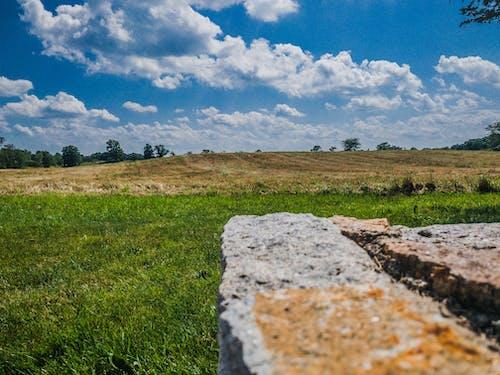 Free stock photo of field, grass, landscape, summer