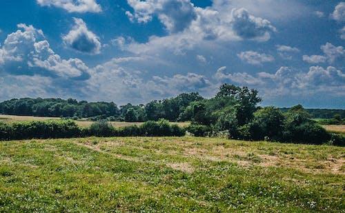 Free stock photo of field, landscape, sky, summer