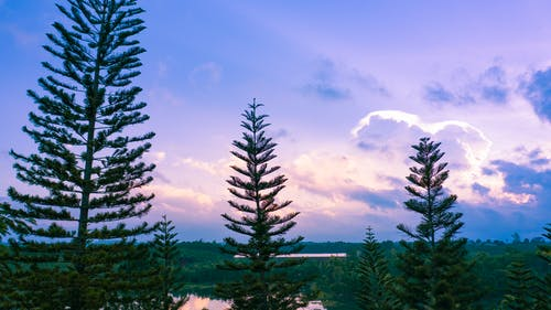 Free stock photo of dramatic sky, forest, natural