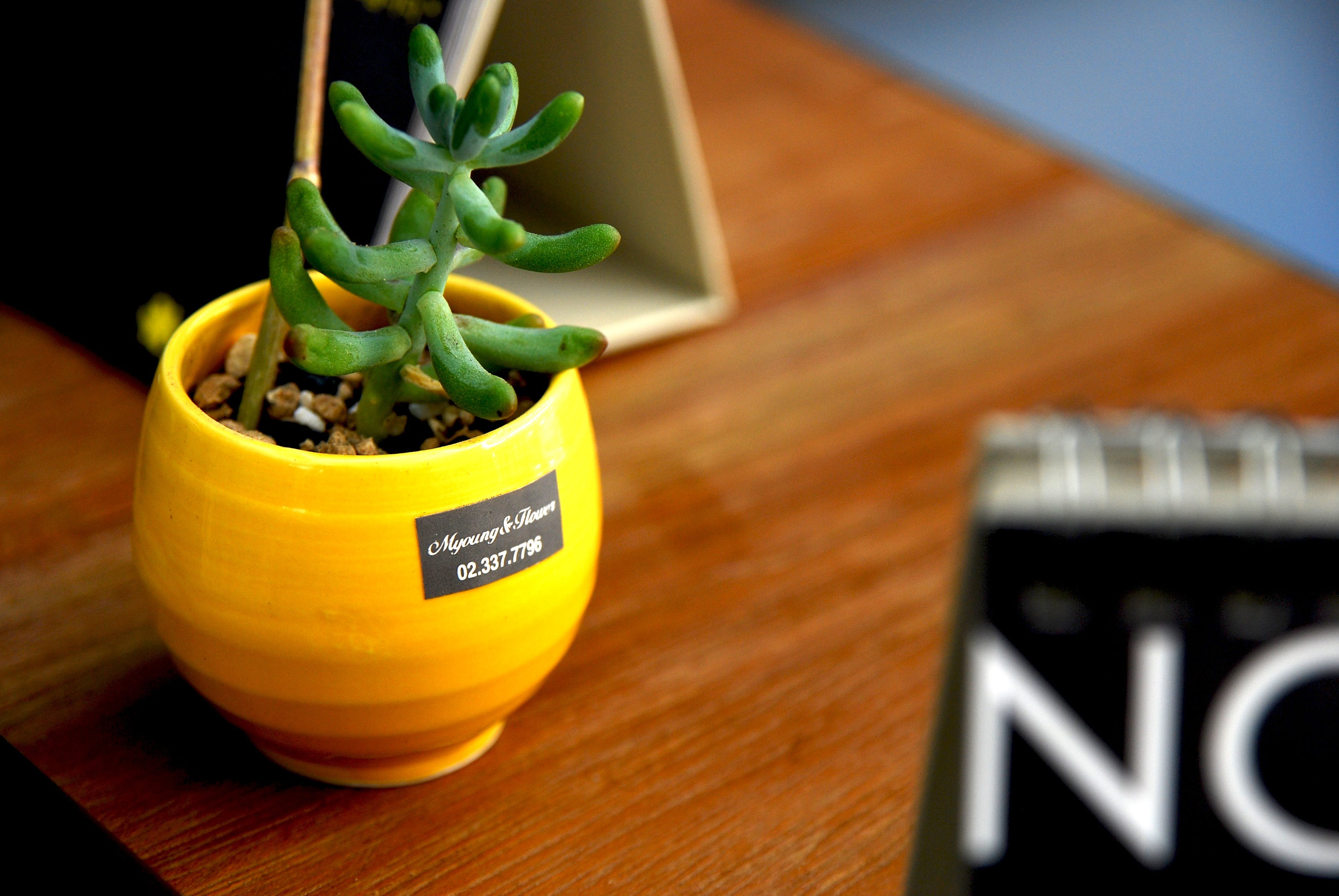 Green Succulent on Brown Wooden Surface