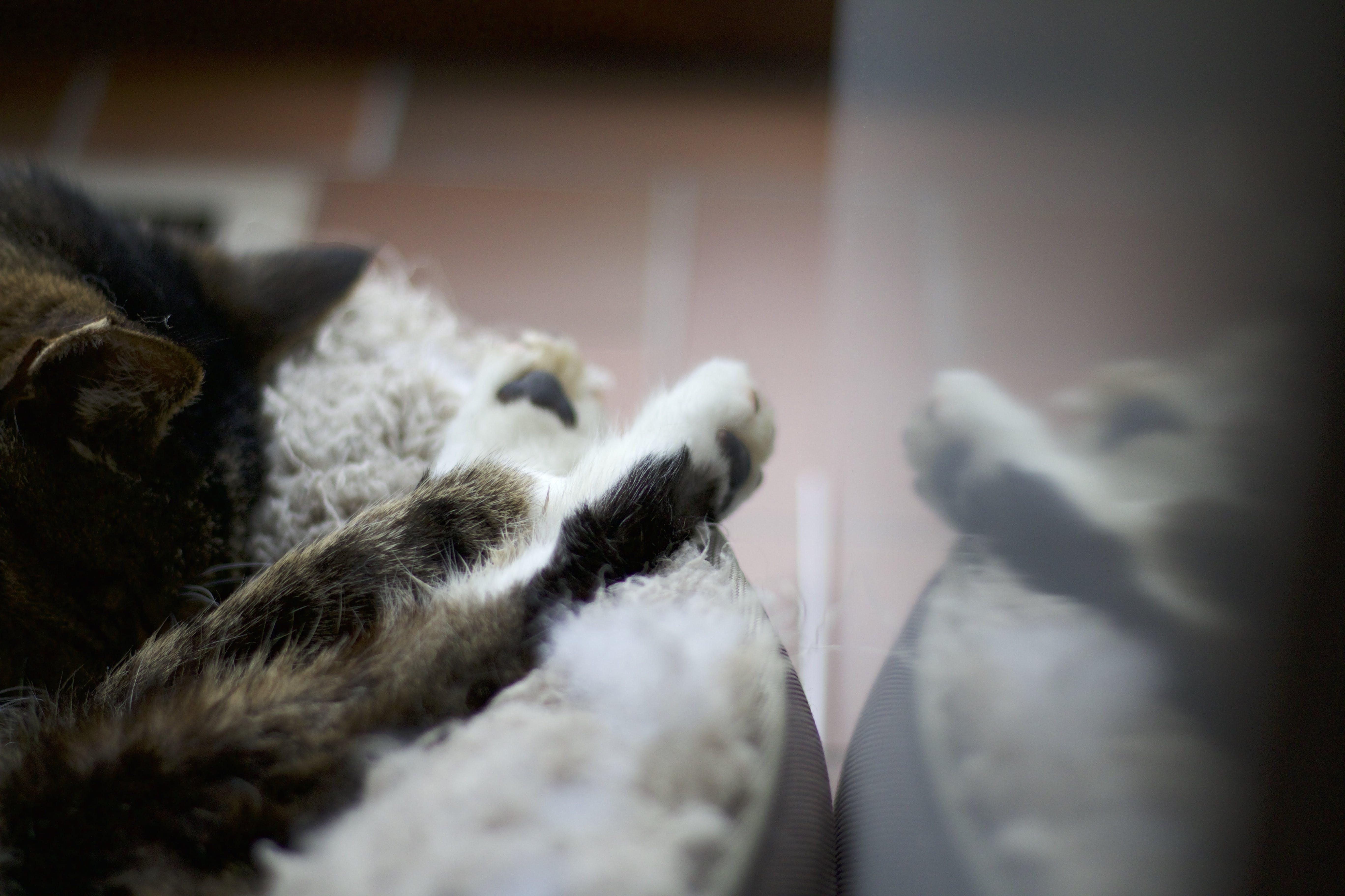 Free stock photo of animal, cute, reflection