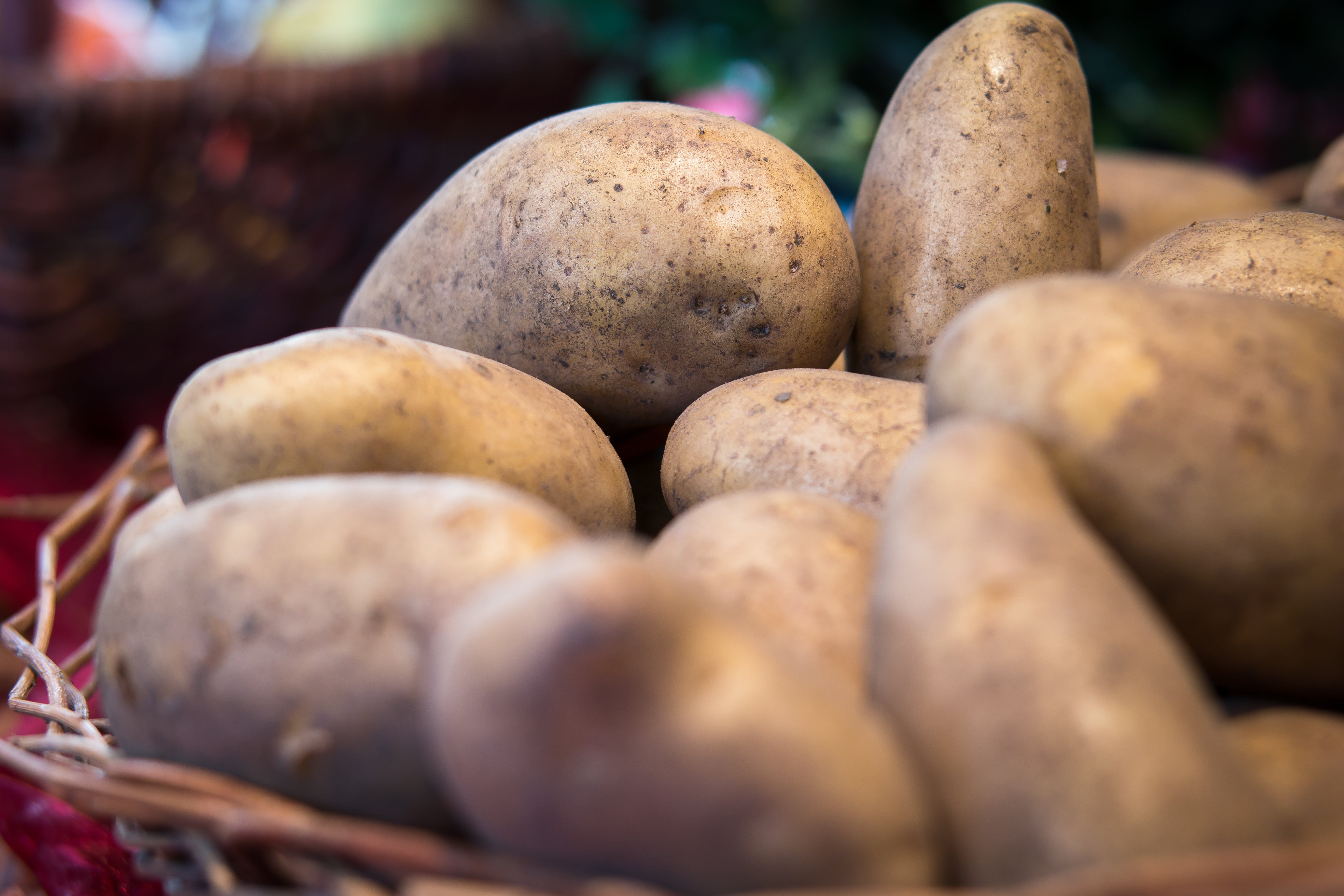 Free stock photo of vegetables, potatoes, agriculture, harvest