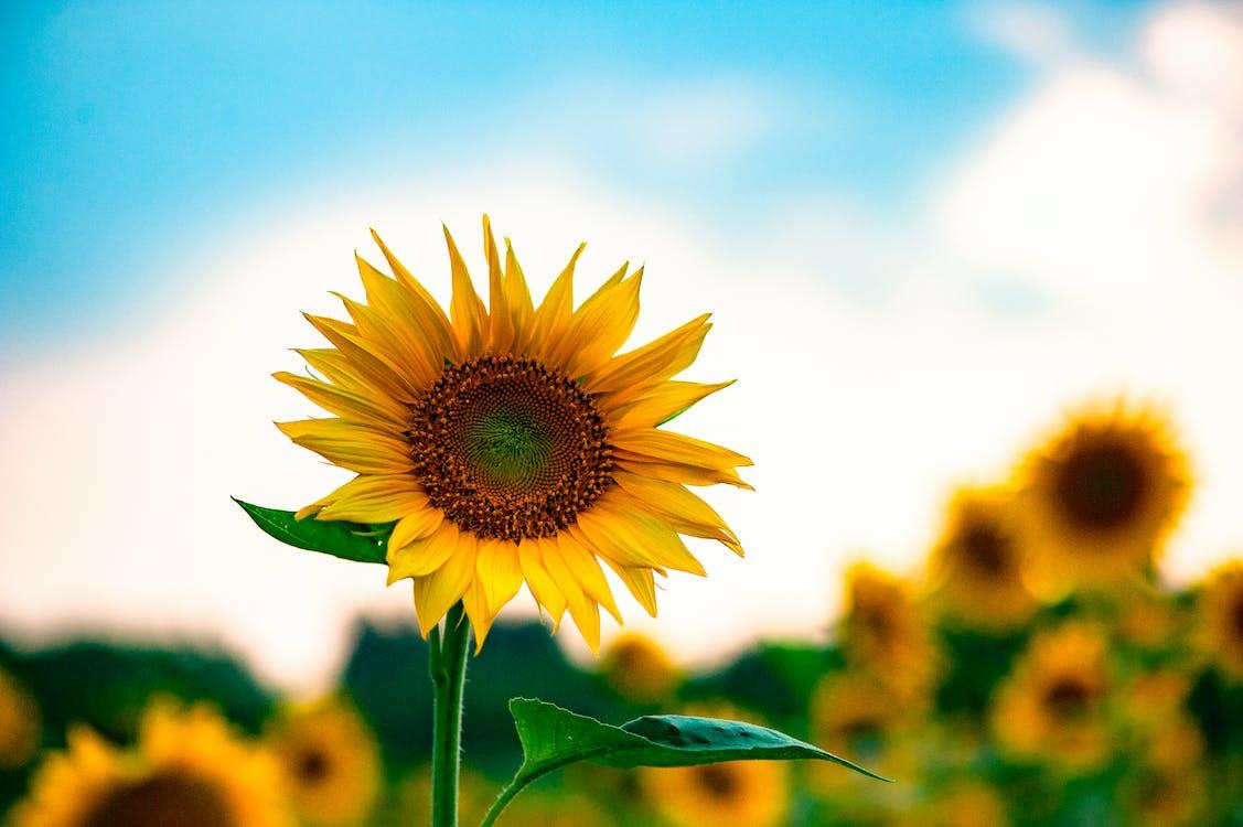 blå himmel, delikat, flora