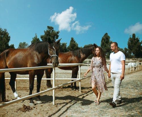 Photos gratuites de animaux, bétail, chevaux, couple