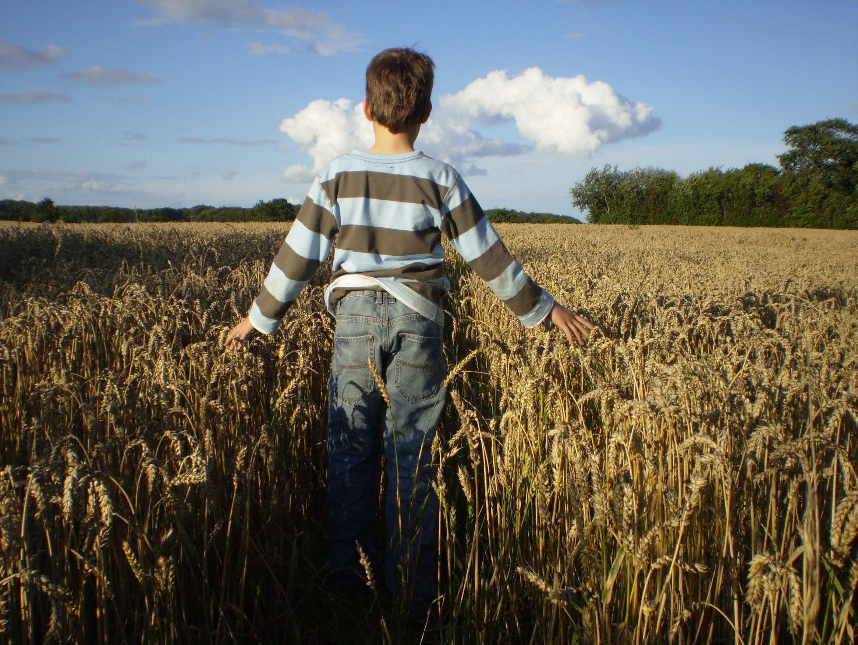 Free stock photo of bread, food, field, harvest