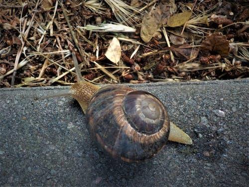 Gratis lagerfoto af snegl