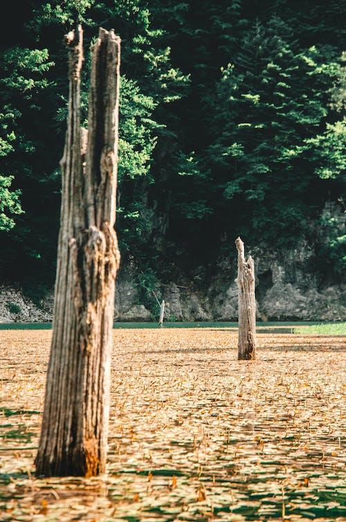Immagine gratuita di acqua, acqua azzurra, foglie cadute, foresta