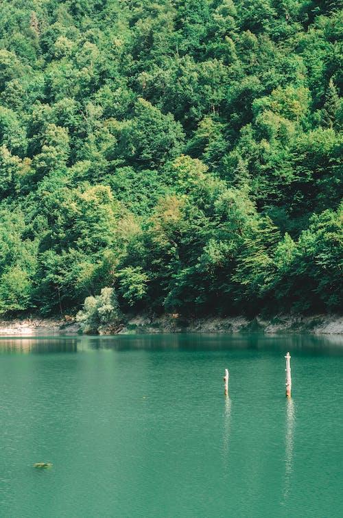 Immagine gratuita di acqua azzurra, foresta, lago, montagna