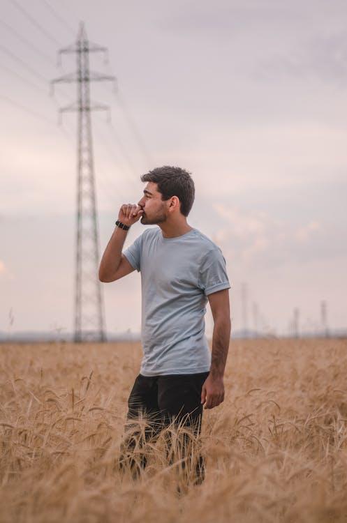 campo, campo di grano, cereale
