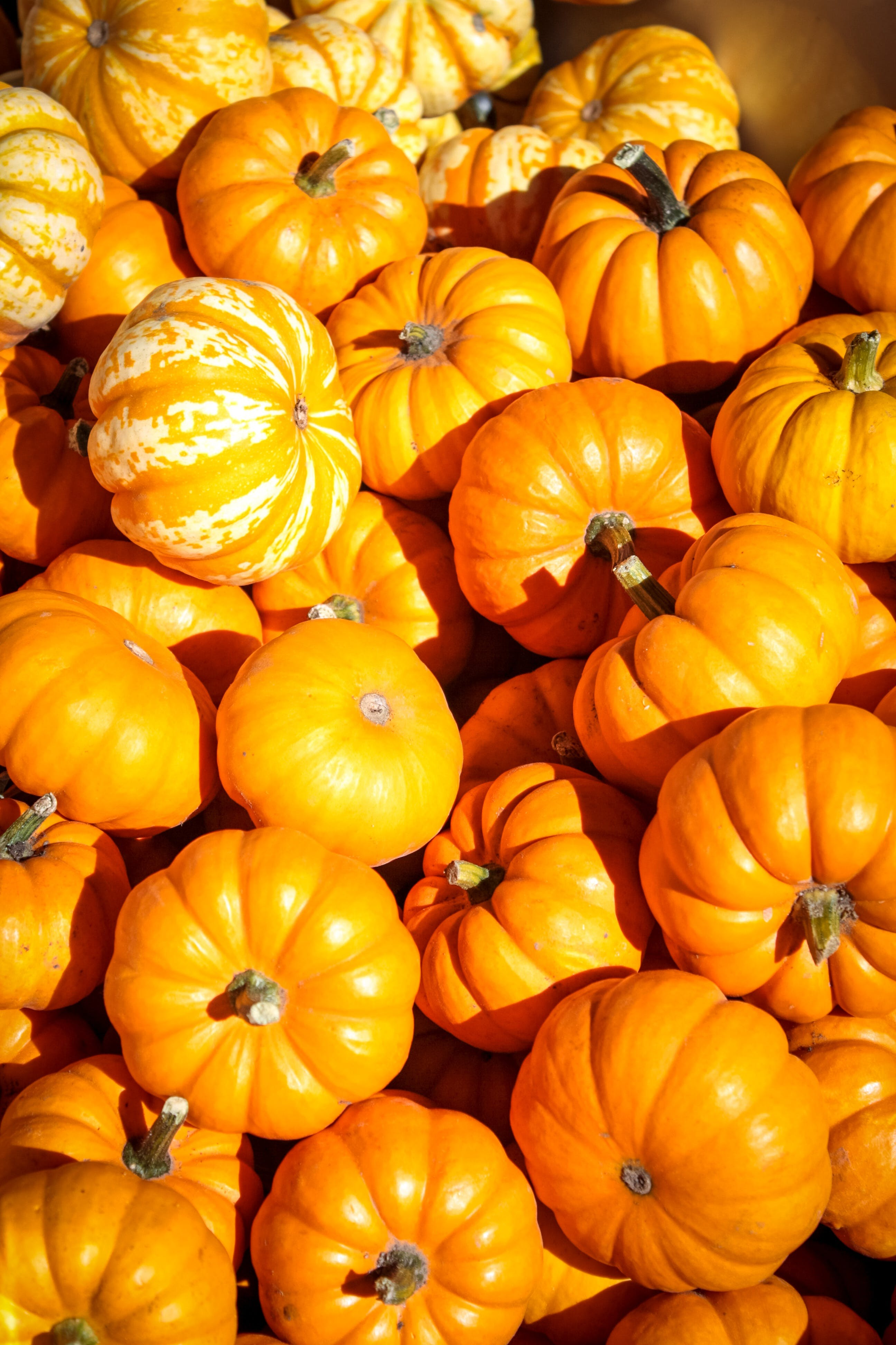 Free stock photo of holiday, agriculture, farm, harvest