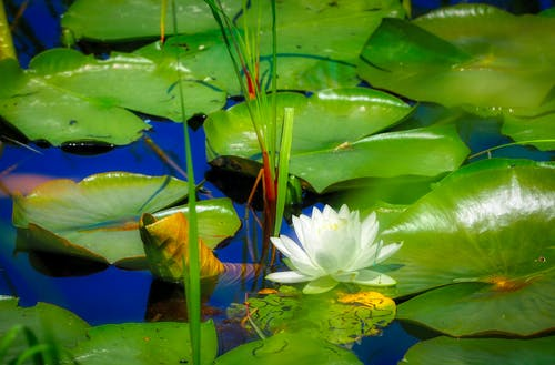 Fotobanka sbezplatnými fotkami na tému jazierko, lekno, leto, voda