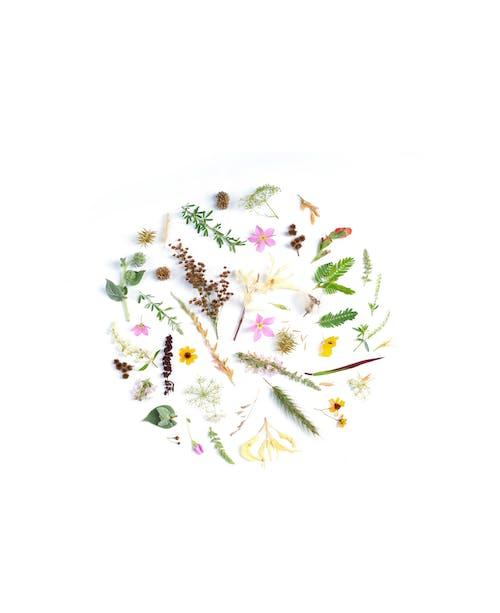 คลังภาพถ่ายฟรี ของ arrrangement, การตกแต่ง, ดอกไม้, พฤกษศาสตร์