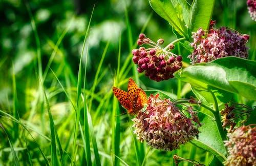 Fotobanka sbezplatnými fotkami na tému kvety, leto, motýľ, oranžová