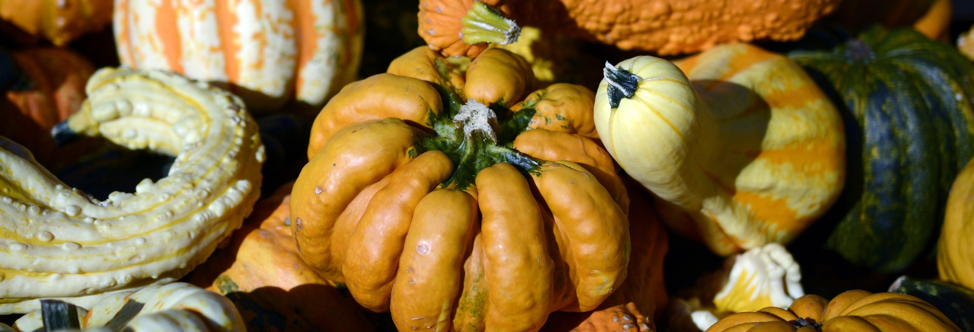 Free stock photo of autumn, autumn decoration, autumn motives, banner
