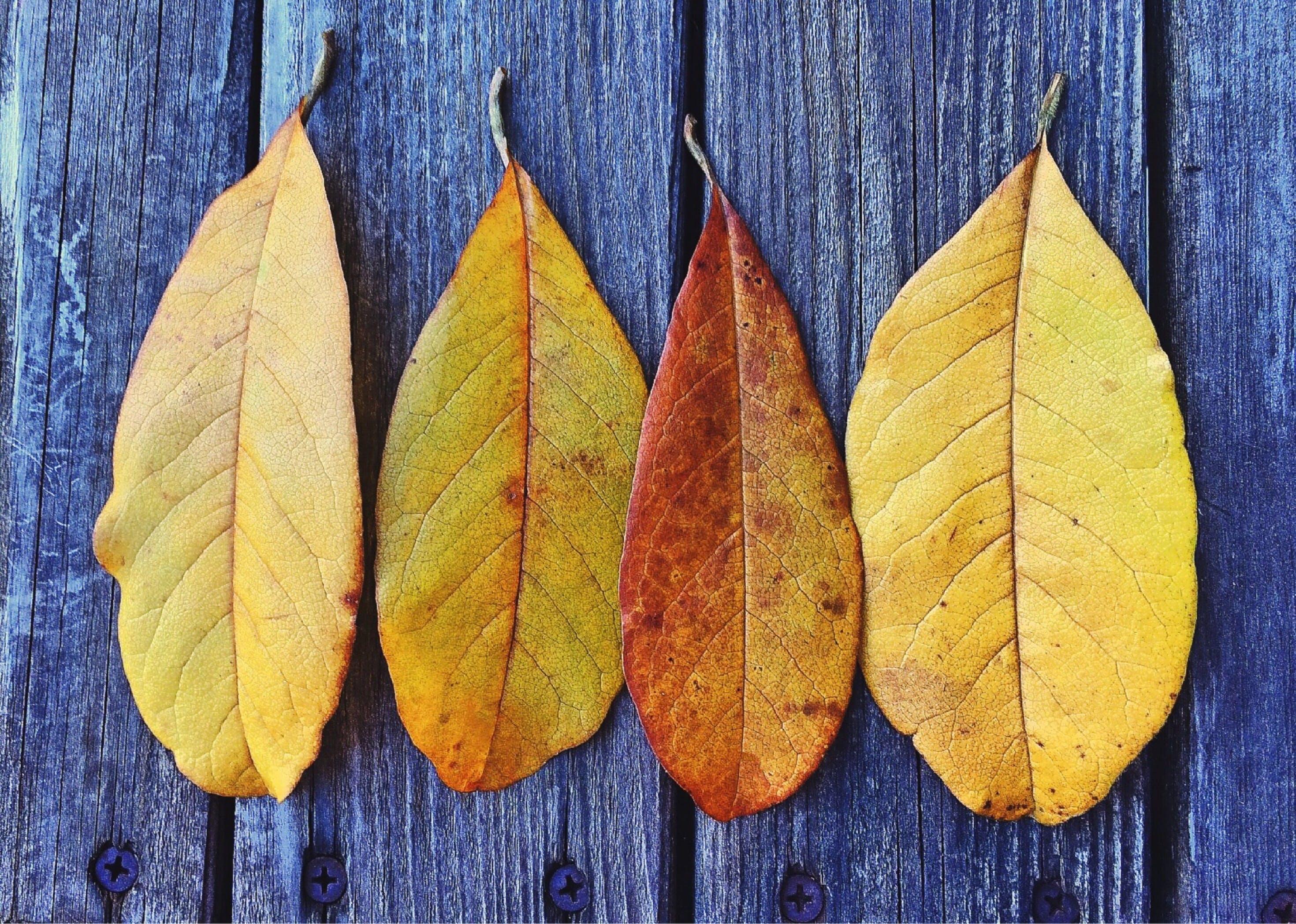 autumn, autumn leaves, bright