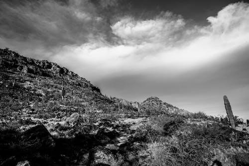 Free stock photo of black and white, bleak, cactus
